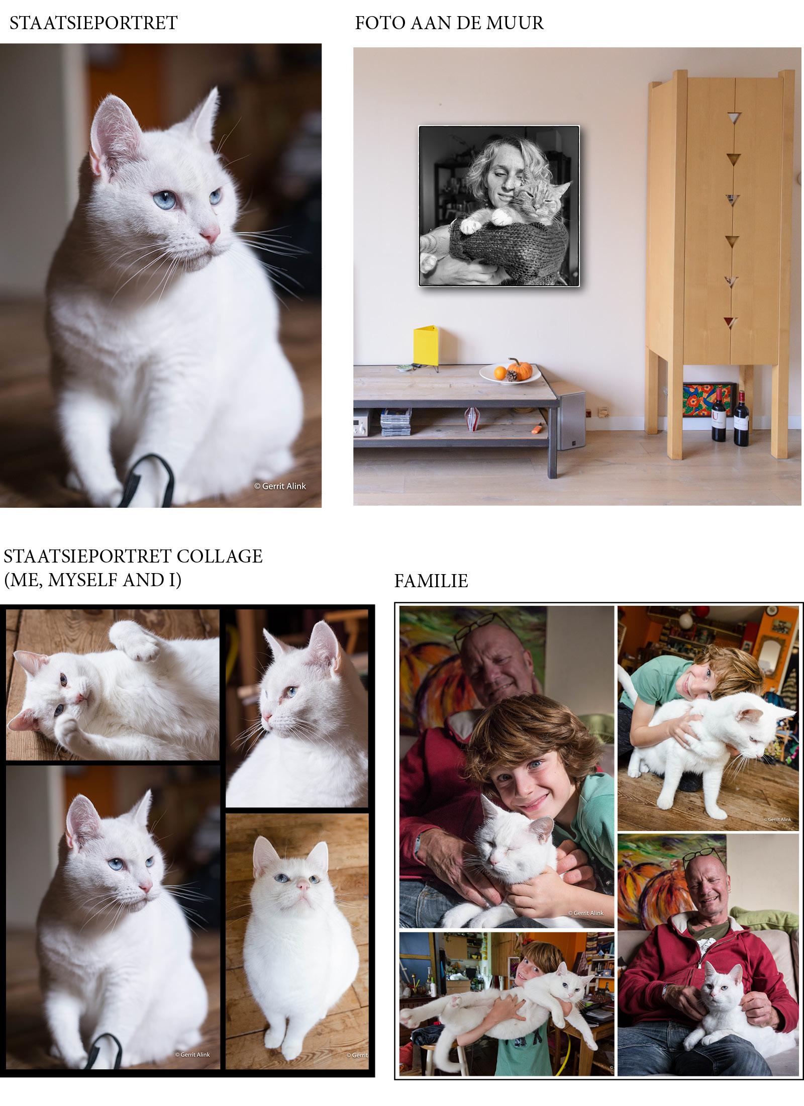katten mogelijkheden